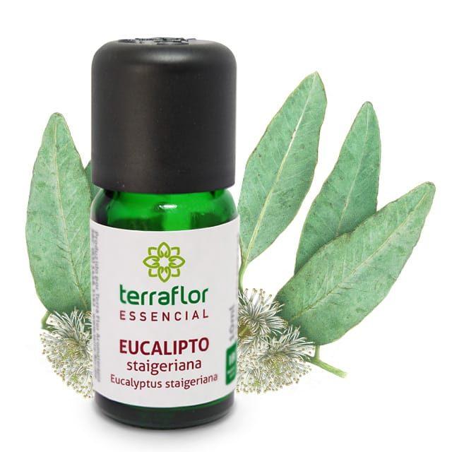Óleo essencial de eucalipto staigeriana 10ml - imagem meramente ilustrativa