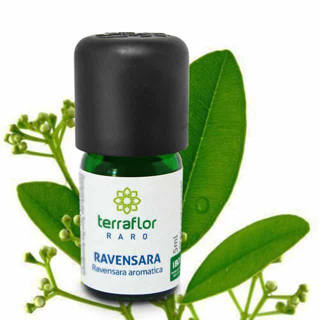 Óleo essencial de Ravensara 5ml - Imagem meramente ilustrativa